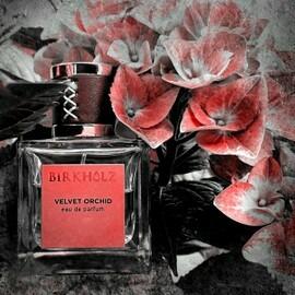 Velvet Orchid von Birkholz