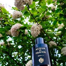 Quercia (Eau de Parfum) - Acqua di Parma