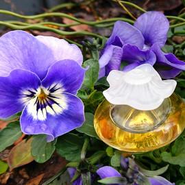 Zwei Blüten strahlen um die Wette ....