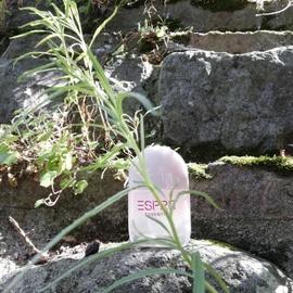 Esprit Essential for Her by Esprit
