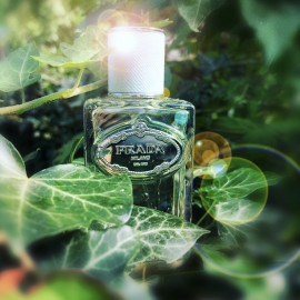 Infusion d'Iris (Eau de Parfum) (2015) by Prada