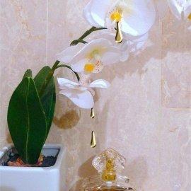 Shalimar (Eau de Toilette) by Guerlain