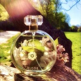 Blossom von Elode