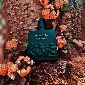 Habanita (2012) (Eau de Parfum) - Molinard