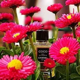 Coco (Eau de Toilette) - Chanel