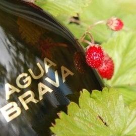 Agua Brava (Eau de Cologne) by Puig
