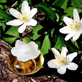 Buschwindröschen. Gepflanzt hat sie niemand und trotzdem so prächtig. Fleur de Fleurs.