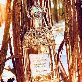 Aqua Allegoria Bergamote Calabria von Guerlain