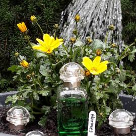 Anzuchtset für Hermes-Gärten