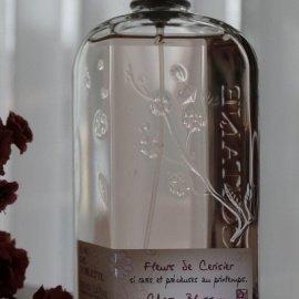 Fleurs de Cerisier / Cherry Blossom (Eau de Toilette) - L'Occitane en Provence