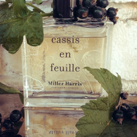 Cassis en Feuille by Miller Harris