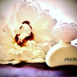 Pivoine - Yves Rocher