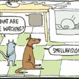 Smellavision