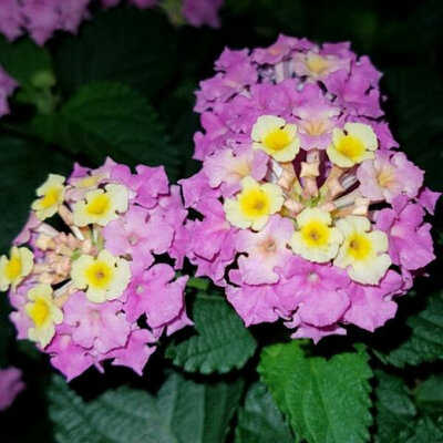 Parfumlove93
